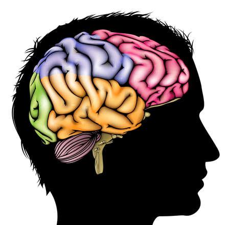 enfermedades mentales: Un hombre de la cabeza en silueta con un cerebro seccionado. Concepto para la mental, psicol�gico, el desarrollo del cerebro, el aprendizaje y la educaci�n u otro tema m�dico Vectores
