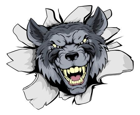 lobo: Un lobo looking mean Mascota del car�cter romper a trav�s de una pared