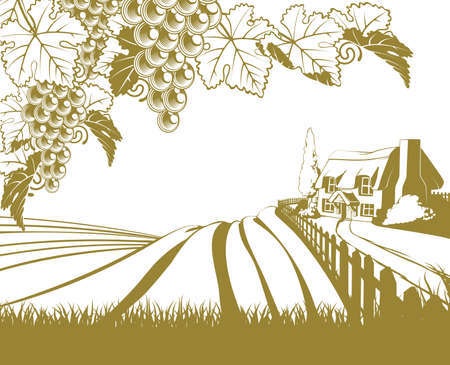 A vineyard rolling hills scene illustration with grape vines