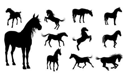 caballo negro: Un conjunto de calidad detallado siluetas altas de caballos