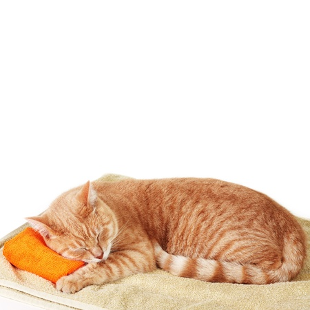 Red tabby cat sleeping isolated on white background. photo