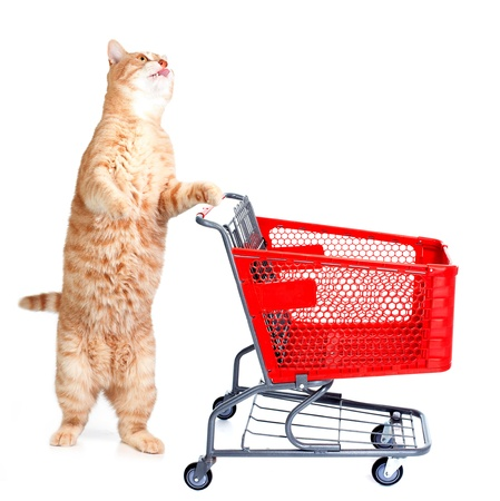 Ginger shopping cat isolated on white background. photo