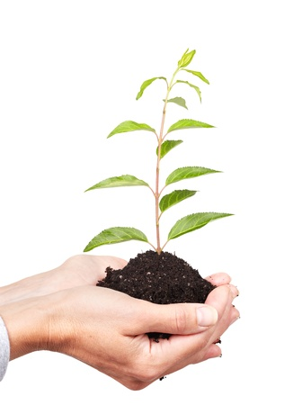 seeding: Woman hands with green plant. Growth concept background.