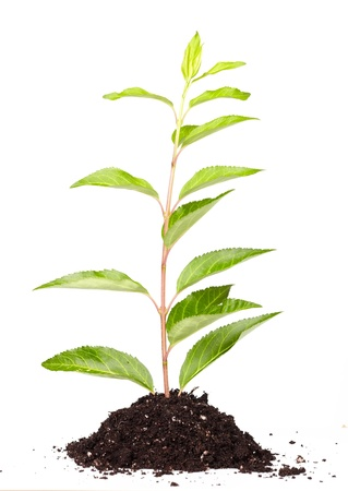 arbre: Green plant isolated on white background. Growth concept.