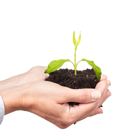 Woman hands with green plant  Growth concept background  photo