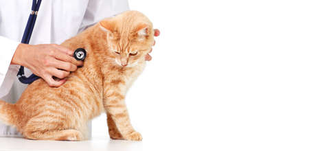 Red cat with veterinarian doctor  Veterinary clinic  photo