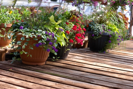foliar: Flowers Stock Photo