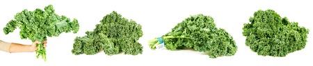 kale: Bundle of curly-leaf kale. Stock Photo