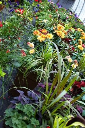 foliar: Flowers.