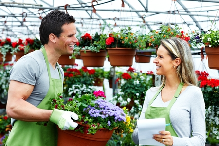 begonia: Florist working with flowers in greenhouse.