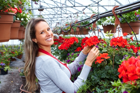 foliar: Florist woman working with flowers in greenhouse. Stock Photo