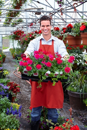 foliar: Florist man working with flowers in greenhouse.