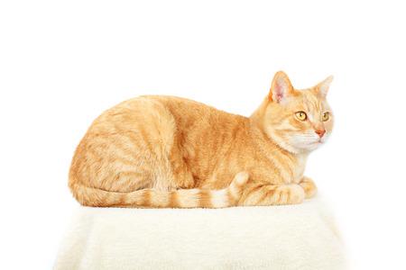 tubby: Domestic cat. Stock Photo