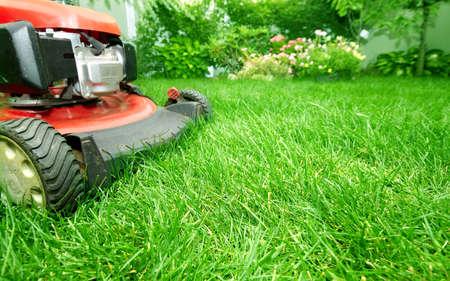 cut grass: Lawn mower cutting green grass in backyard.Gardening background.