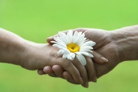 handshake with daisy(focus on the flower,special soft photo f/x) Stock Photo - 449471