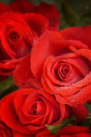 alight: rose nelle categorie a macroistruzione (speciale morbido f  x, punto focale thr pi� vicino a fiore)