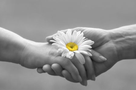 handshake with daisy(focus on the flower,special soft photo fx)