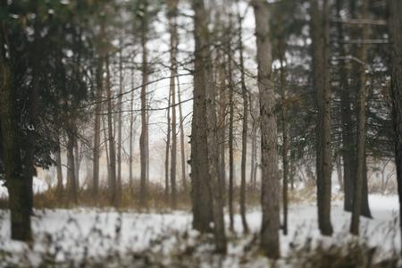 snow forest: winter landscape Stock Photo