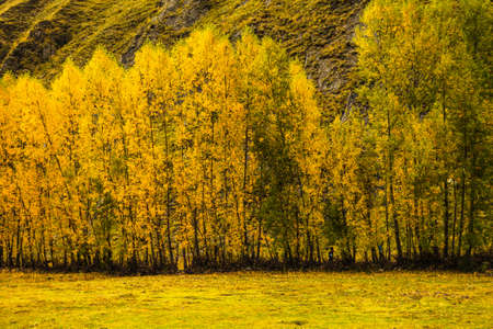 golden: Golden Autumn Stock Photo