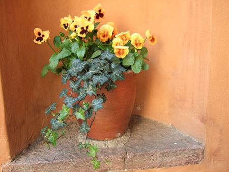 niche: Yellow pansies in a flower pot standing in a niche