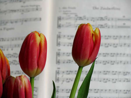 re do: Music and Flowers Stock Photo