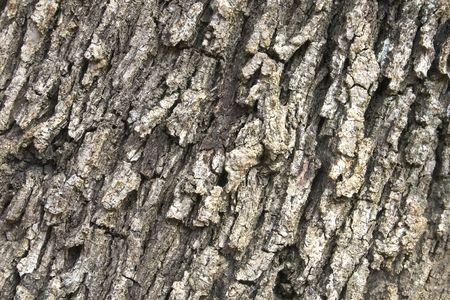 wrinkled rind: bark texture 01