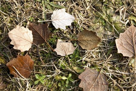 leafs photo