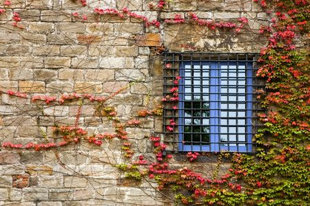 Ancient window in a wall covered with ivy photo