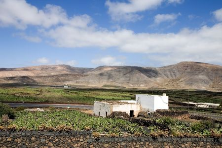 obtain: Prickly pear cactus farm ( where cochineal is cultivated to obtain a red dye )  in Guatiza, Lanzarote, Canary Islands, Spain Stock Photo
