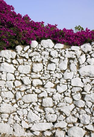 whitewashed: A decorative whitewashed stone wall with bougainvillea