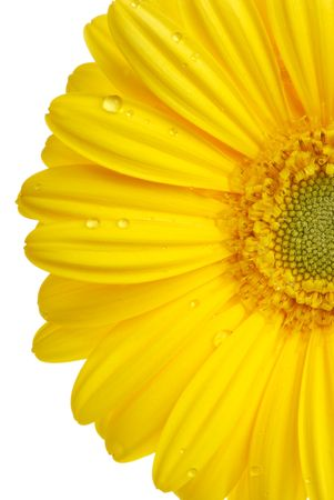 Yellow gerbera (daisy). Picture was made in a studio. photo