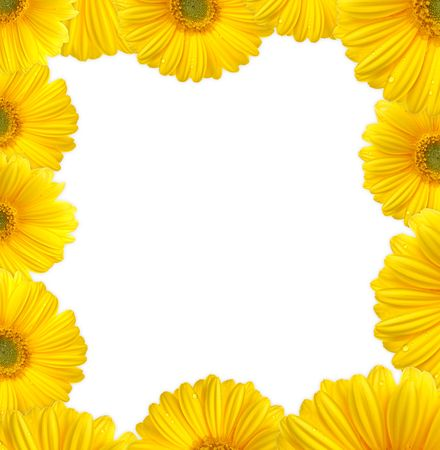 Yellow gerbera as a picture frame. Picture was made in a studio. photo