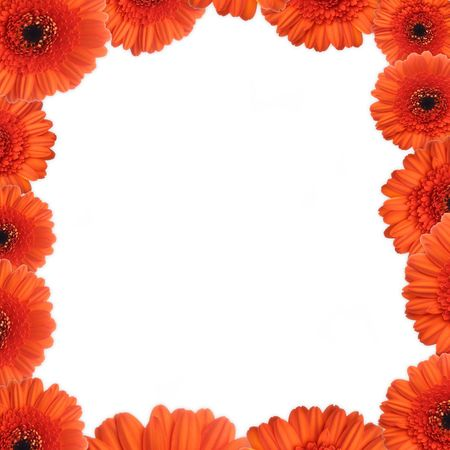 Red gerbera as a picture frame. Picture was made in a studio. photo