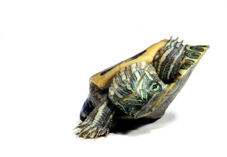 despacio: Tortuga en la espalda