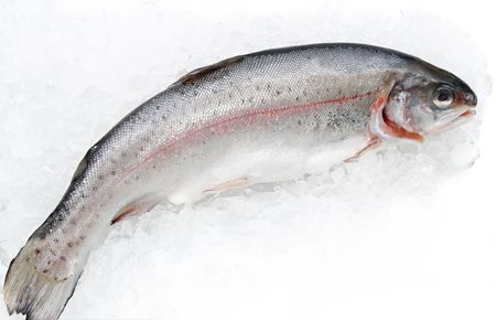 fresh trout fish on ice Stock Photo - 4006872