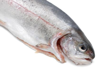 fresh trout fish, white background Stock Photo - 4006873