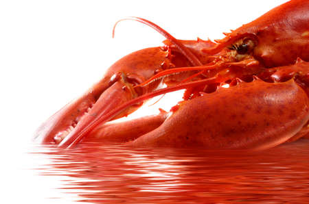 close-up on fresh red lobster in water