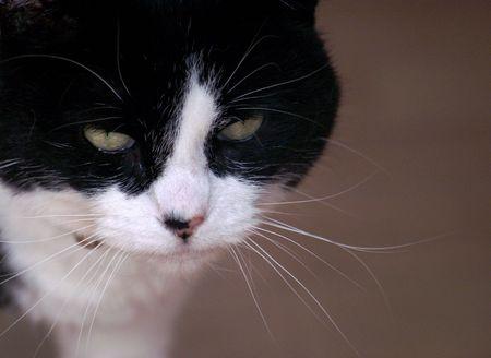 stare: Cat Stare
