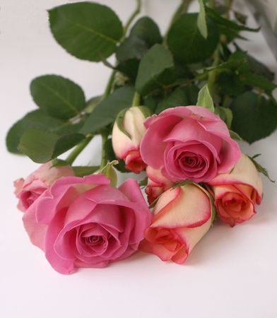 Freshly Cut Roses photo
