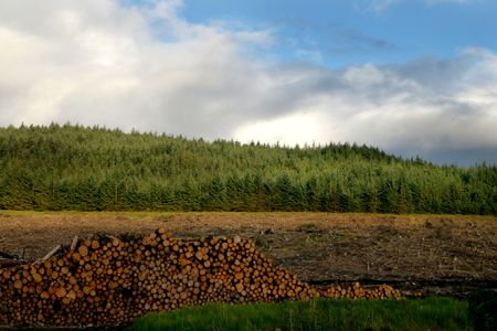logging: Forest Timber and Logging