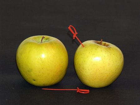 duelling: Duelling apples Stock Photo
