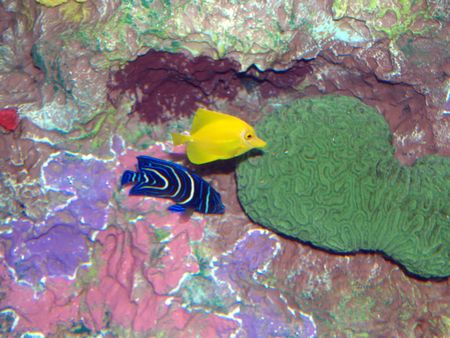 Tropical fishes photo