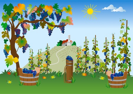 cultivating: Vineyard Illustration