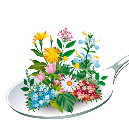fiori di campo: Herb - Cucchiaio di salute Vettoriali