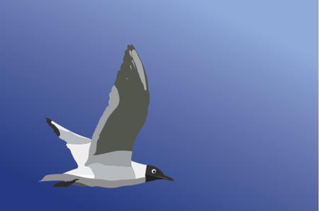 aerial animal: Seagull Illustration