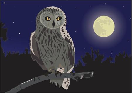 moon  owl  silhouette: Owl Illustration