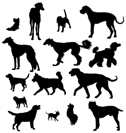 Vector dog collection on a white background Vector