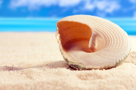 Seashell on the sandy beach photo