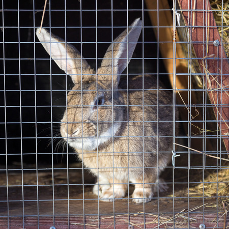 rabbit cage: Coniglio grigio in gabbia in una giornata di sole