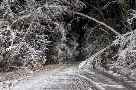 Snow falls on a winter road in the night forest Stock Photo